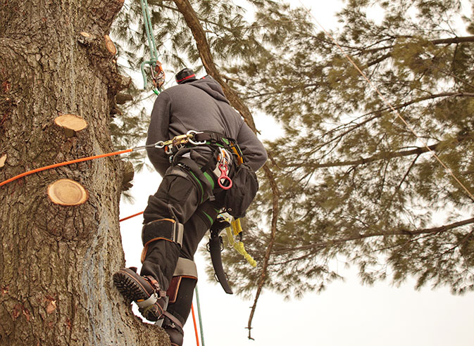 JK Tree Service employee trimming a tree