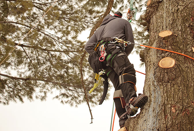 JK Tree Service LLC employee trimming a tree