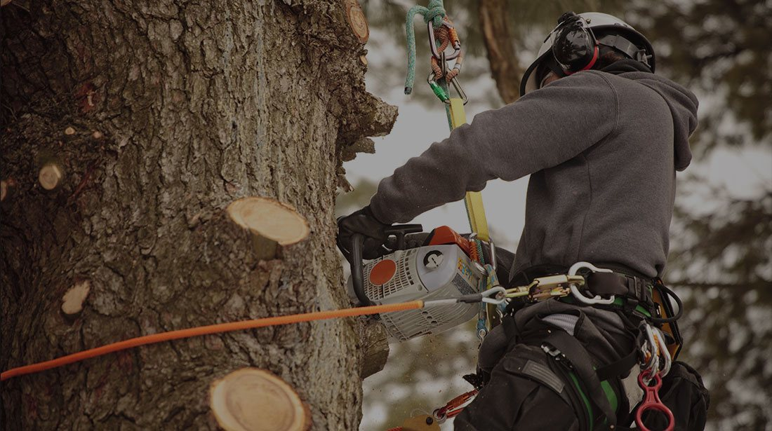 JK Tree Service LLC: Stump and tree removal in Perry, Geneva and Painesville