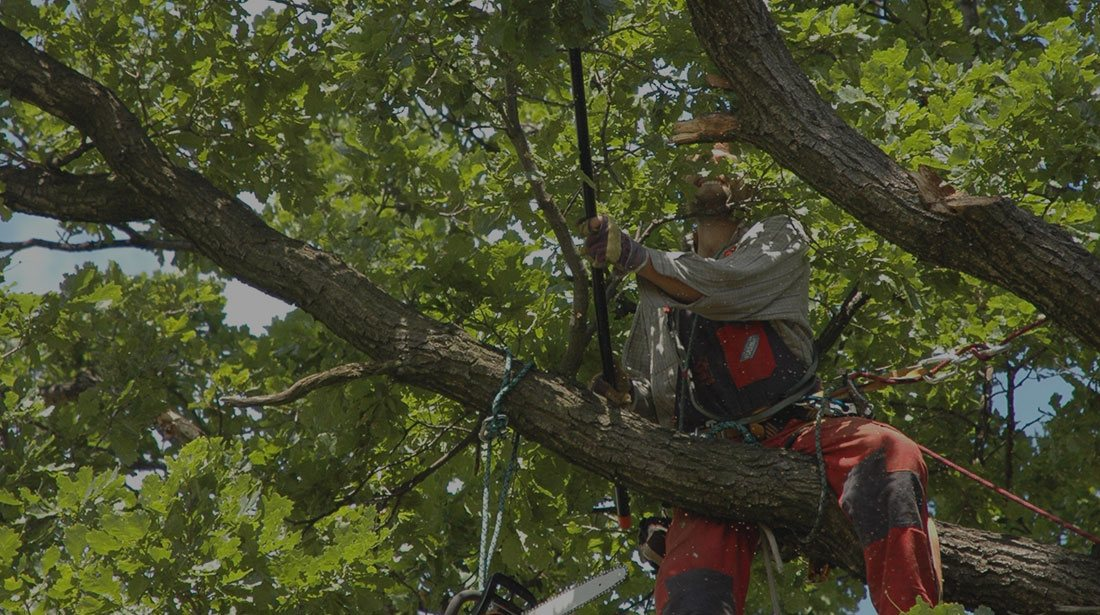 JK Tree Service LLC: Tree cabling and bracing in Perry, Geneva and Painesville