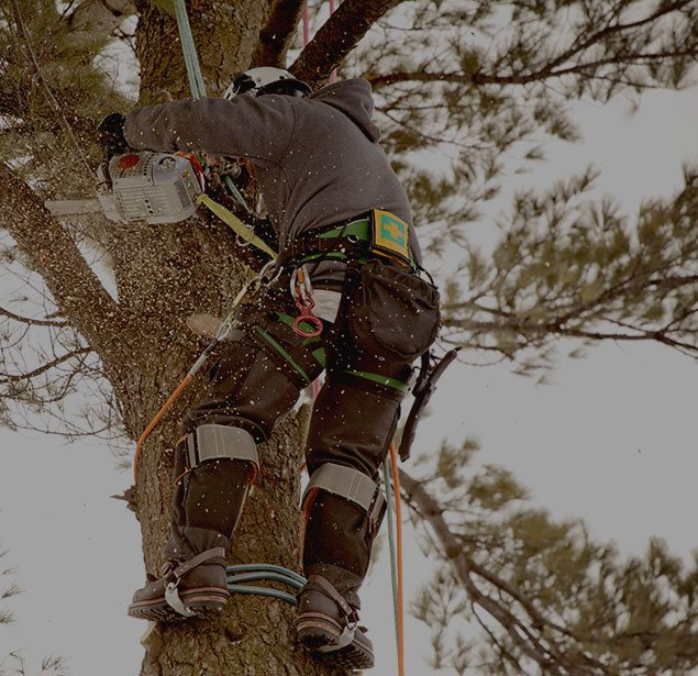 JK Tree Service LLC: Tree health in Perry, Geneva and Painesville